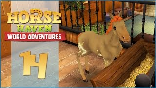 getlinkyoutube.com-Horse Haven || A Star-Studded Foal Is Born!! - Episode #14