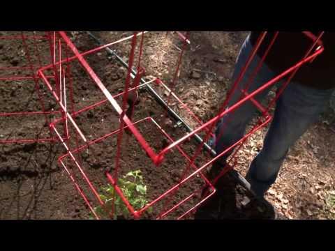 Quick Start Gardening Guide: Planting Tomatoes