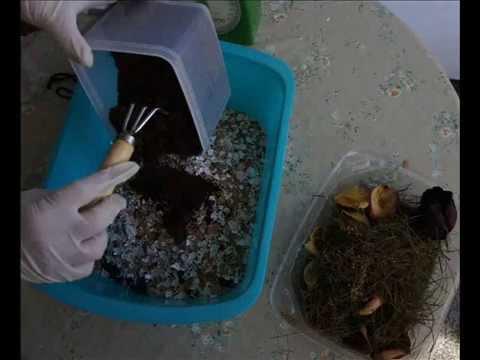 Reciclaje: Abono Casero