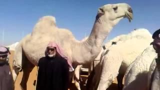 getlinkyoutube.com-ابل عليان الطهيمي