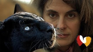 getlinkyoutube.com-Black Leopard and The Animal Communicator, Anna Breytenbach