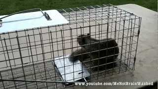 getlinkyoutube.com-Live Animal Trap for Squirrels