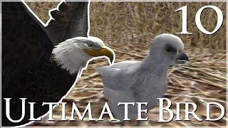 Our Baby Eaglet Hatches!! • Ultimate Bird Simulator - Episode #10