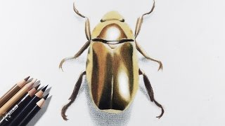 getlinkyoutube.com-How to draw gold / metallic object with colored pencils -- A golden beetle.