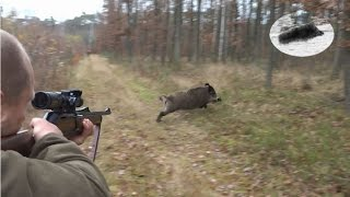 Best moments - November 2016 - driven hunt compilation - Drückjagd Beste Momente Chasse en battue