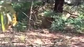 getlinkyoutube.com-ทำใจก่อนดู! พลานล่าสิงโต  madotube com   YouTube
