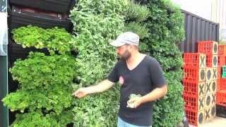 getlinkyoutube.com-Wall Garden | Vertical Garden Installation & Operation