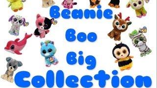 getlinkyoutube.com-Beanie Boo Big Collection ( Update ) - 83 Beanie Boo's