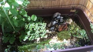 getlinkyoutube.com-メダカのビオトープ  〜滝を作ってみた〜