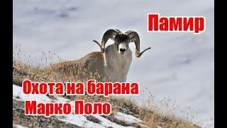 getlinkyoutube.com-Памир. Охота на брана Марко Поло (RUS)