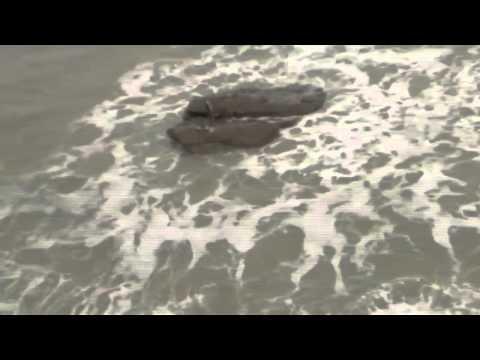 Sirena real captada en video