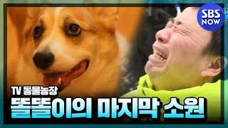 getlinkyoutube.com-SBS [동물농장] - 강원래&김송 부부와 똘똘이의 마지막 소원