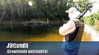 getlinkyoutube.com-Pescaria de Jacundás e Saicangas com Spinner em Morretes - PR