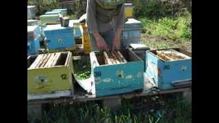 getlinkyoutube.com-Пчеловодство.Объединение 3 в 1