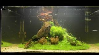 "getlinkyoutube.com-Aquascape Tutorial ""Nature's Chaos"" by James Findley - The Making Of"