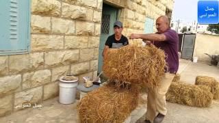 getlinkyoutube.com-صيد افعى 22-10- 2015 بعد يأس والمفاجئه هي افعى مع جمال العمواسي