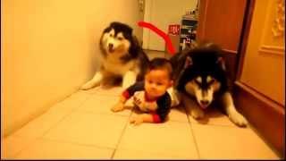 getlinkyoutube.com-Dog and kid   Собаки и ребенок, прикол