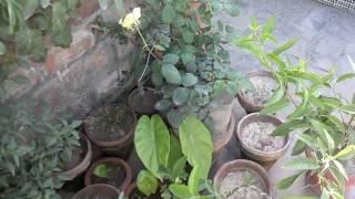 getlinkyoutube.com-Kitchen Gardening Overview | Beginning Vegetable Gardening April-2016 (Urdu/hindi)