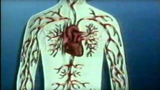 getlinkyoutube.com-معلومات عن جسم الانسان :القلب