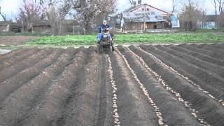 getlinkyoutube.com-Мини трактор из мотоблока на посадке картофеля.