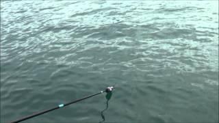 getlinkyoutube.com-Εγγλέζικο ψάρεμα με ψωμί real fishing