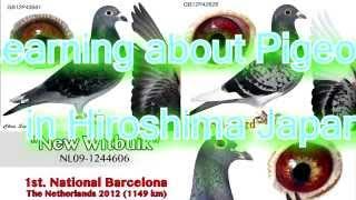 getlinkyoutube.com-Learning about Pigeon in Hiroshima Japan (D-8)