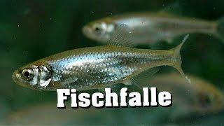getlinkyoutube.com-30 Sekunden Fischfalle