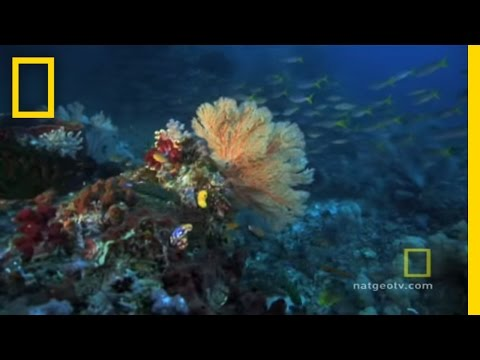 Exploring Oceans: Great Barrier Reef