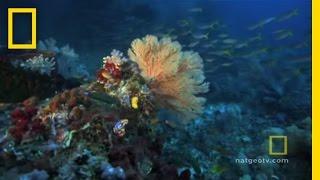 getlinkyoutube.com-Great Barrier Reef | Exploring Oceans