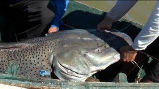 getlinkyoutube.com-Pesca na rodada na Argentina - com um gigante surubim!!!