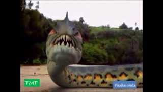 getlinkyoutube.com-Pirañaconda