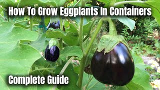 How To Grow Eggplants In Containers - The Complete Guide