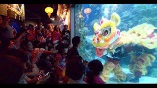 getlinkyoutube.com-Underwater Lion Dance @ Aquaria KLCC