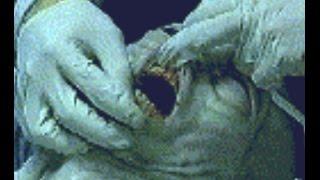 getlinkyoutube.com-The Real Alien Footages Video☆☆☆☆