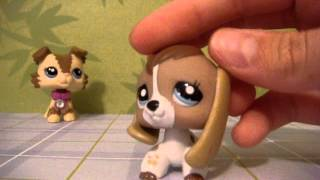 getlinkyoutube.com-My whole LPS collection