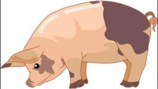 getlinkyoutube.com-حقائق مرعبه .. الخنزير ..  صدق أو لا تصدق  | معلومه هامه وخطيره |