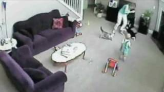 getlinkyoutube.com-Gato defiende a bebé de niñera