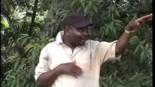 Phungu Joseph Nkasa - Chilungamo