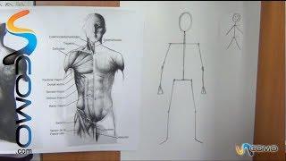 getlinkyoutube.com-Cómo dibujar el cuerpo humano  (1º parte)