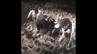 Cheyenne Mountain Zoo Giraffe 'Birth Cam' width=