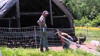 getlinkyoutube.com-Kingbird Farm - Layer Management & Egg Production (2 of 2).mov