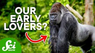 getlinkyoutube.com-The Sex Lives of Early Humans