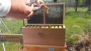 getlinkyoutube.com-Metropolis Of Propolis Episode 3 Installing Hive Number 1