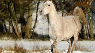 getlinkyoutube.com-Nic- 2 Weisse Pferde