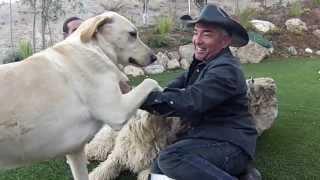 getlinkyoutube.com-THE DOG THAT BIT CESAR MILLAN: KISS ATACK