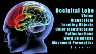 Traumatic Brain Injuries:  Effects of damage to different lobes of the brain