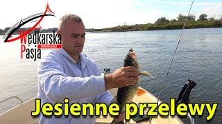 getlinkyoutube.com-Jesienne przelewy   odc.105   wędkarstwo spinningowe nad rzeką
