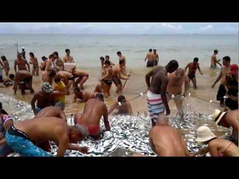 Distribuição de peixes em Manguinhos - Serra - ES