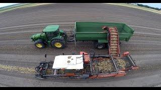 getlinkyoutube.com-Onion Harvest in Germany with AMAC ZM2  || Zwiebelernte mit AMAC ZM2