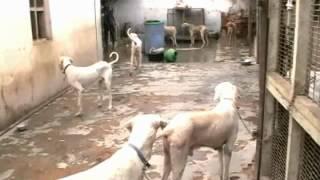 getlinkyoutube.com-rajapalayam co-operative society.wmv